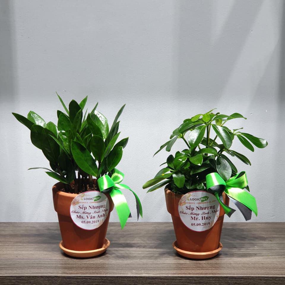BGĐ Công ty LogicBUY tặng cây xanh cho nhân viên dịp sinh nhật